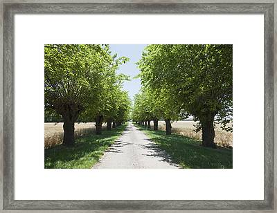 France, Drome, Montvendre, Single Lane Road Lined With Trees Framed Print by Jan Scherders