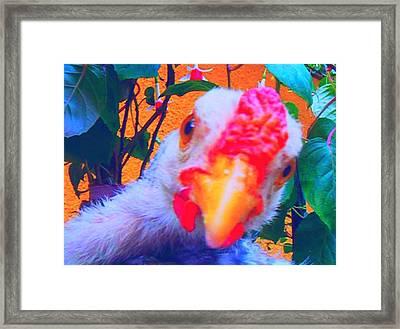 Framed Print featuring the photograph Francisco by Bogdan Floridana Oana