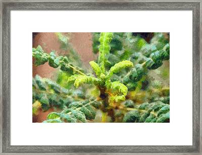 Frankincense Tree Leaves Framed Print