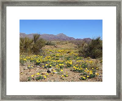 Franklin Mt. Poppies Framed Print by Kurt Van Wagner
