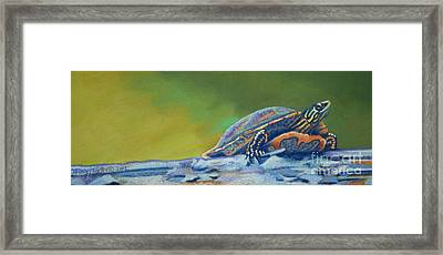 Frank's Turtle Framed Print by Tracy L Teeter