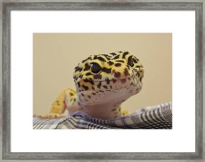 Freckles The Smiling Leopard Gecko Framed Print by Chad and Stacey Hall