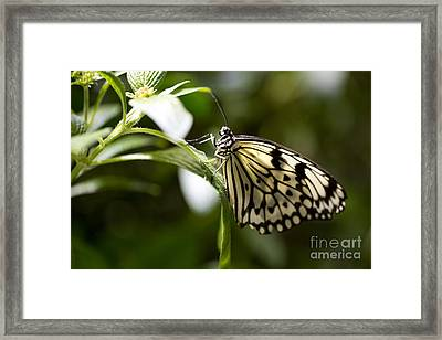 Framed Print featuring the photograph Fred by Leslie Leda