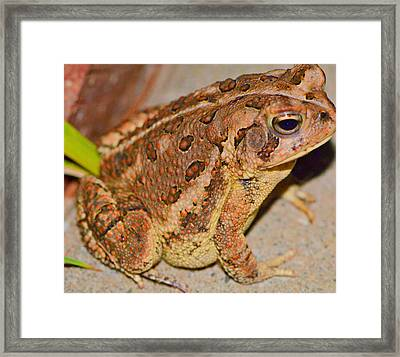 Freddie The Frog Framed Print by Tanya Tanski