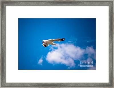 Free A  Bird Framed Print by John Buxton
