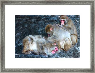 Free Buffet And Grooming Framed Print