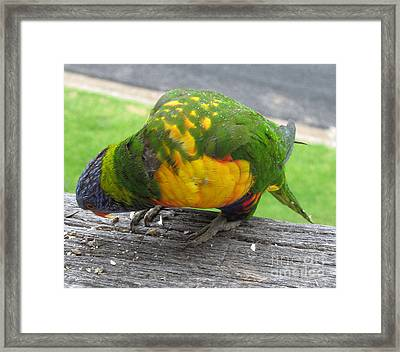 Free Feed Framed Print by Joanne Kocwin