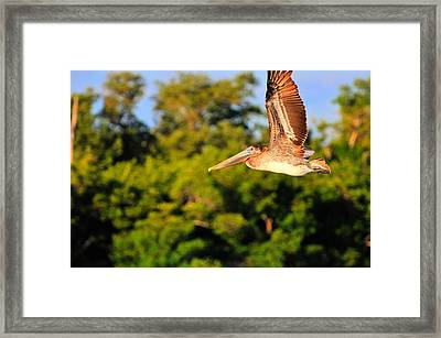 Free Flight Framed Print by Barry R Jones Jr