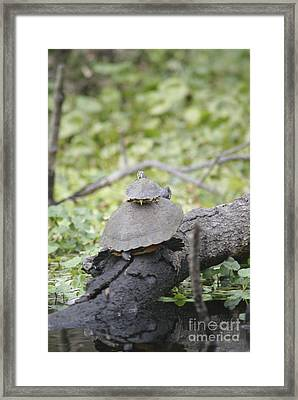 Free Loader Framed Print by Jack Norton