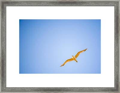 Free Framed Print by Miguel Capelo