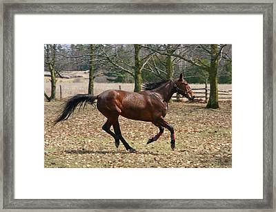 Framed Print featuring the photograph Free Spirit by Davandra Cribbie
