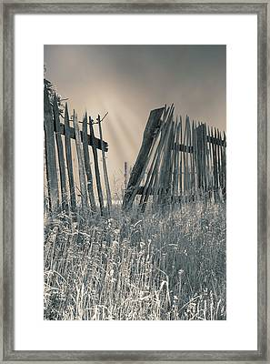 Framed Print featuring the photograph Freedom by Mary Almond