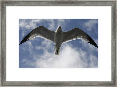 Freedom Framed Print by Natalija Wortman