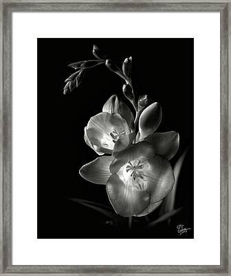 Freesia In Black And White Framed Print