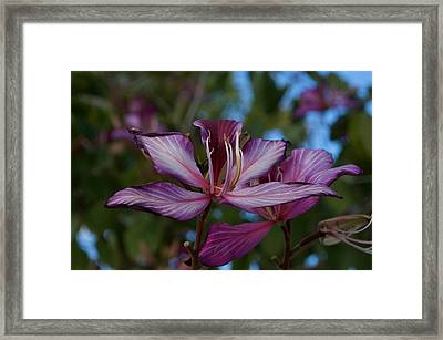 Freeze Framed Print by Joseph Yarbrough