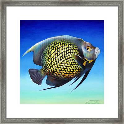 French Angelfish With Attitude Framed Print by Nancy Tilles