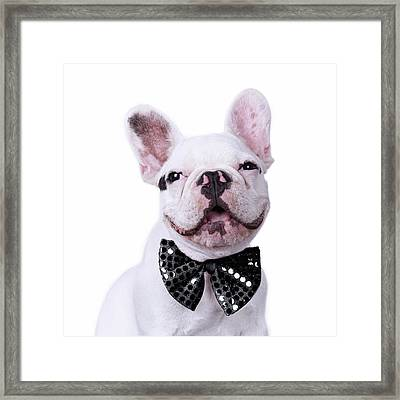 French Bulldog And Bow Tie Framed Print by Maika 777