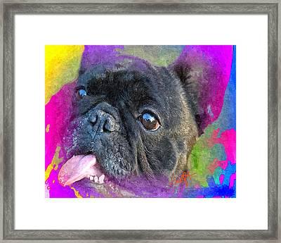 French Bulldog Framed Print by Char Swift