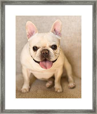 French Bulldog Framed Print by Jody Trappe Photography