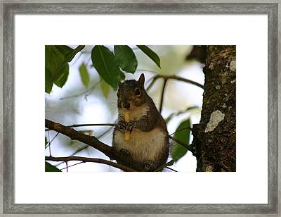 Framed Print featuring the photograph French Fry Anyone by Jeanne Andrews