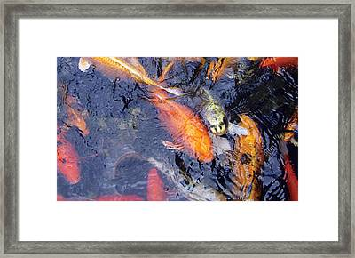 Framed Print featuring the photograph Frenzy by Dan Menta