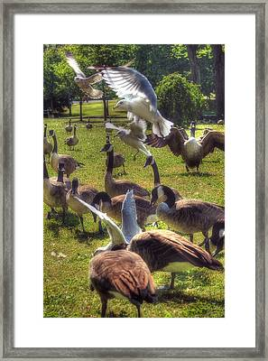 Frenzy Framed Print by Joann Vitali