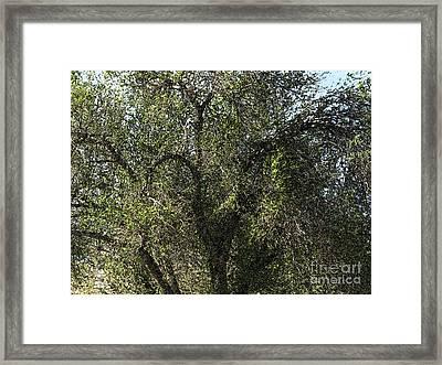 Fresco Tree Framed Print