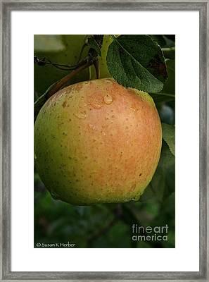 Fresh Apple Framed Print by Susan Herber