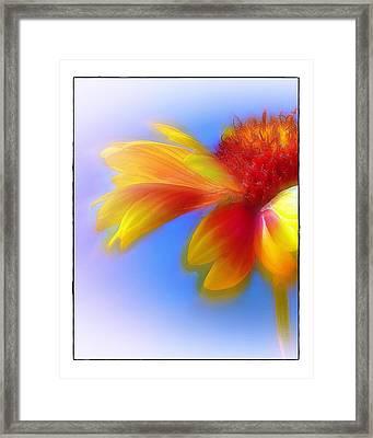 Fresh As A Daisy Framed Print by Judi Bagwell