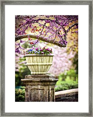 Framed Print featuring the photograph Fresh As Springtime by Cheryl Davis