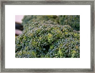 Fresh Broccoli Framed Print by Susan Herber
