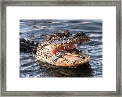 Fresh Crab Framed Print by Phil Lanoue