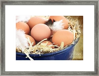 Fresh Farm Eggs Framed Print by Stephanie Frey