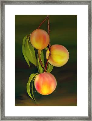 Framed Print featuring the photograph Fresh Fruit by Sami Martin