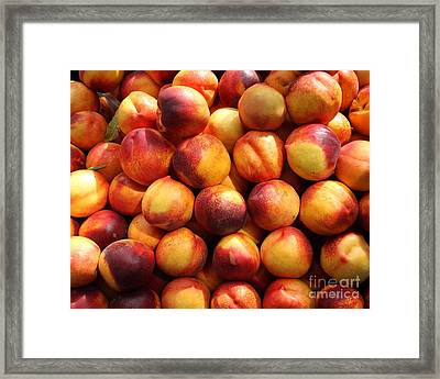 Fresh Nectarines - 5d17815 Framed Print by Wingsdomain Art and Photography