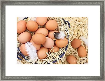 Fresh Organic Farm Eggs Framed Print by Stephanie Frey
