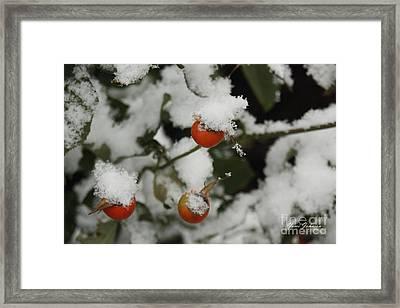 Fresh Snow Framed Print by Yumi Johnson