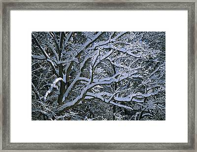 Fresh Snowfall Blankets Tree Branches Framed Print