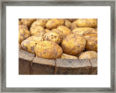 Freshly Harvested Potatoes In A Wooden Bucket Framed Print by Tom Gowanlock