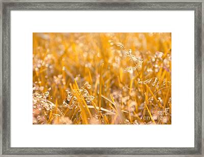 Freshness Framed Print by Aimelle