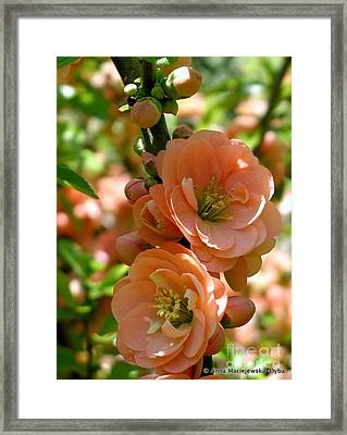 Freshness Of The Spring Framed Print by Anna Folkartanna Maciejewska-Dyba