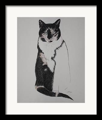 Spirit Cat Essence Framed Prints