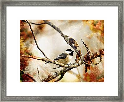 Friendly Carolina Chickadee Framed Print by J Larry Walker