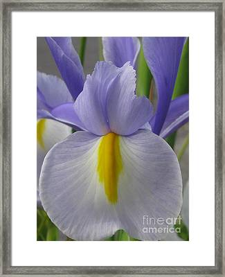 Framed Print featuring the photograph Friendly by Tina Marie