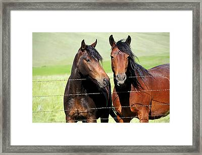 Framed Print featuring the photograph Friends by Fran Riley