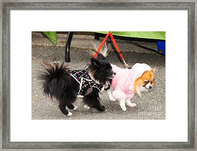 Framed Print featuring the photograph Friends by Jack Moskovita