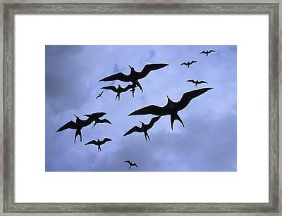 Frigate Birds In Flight. Lighthouse Framed Print by Ron Watts