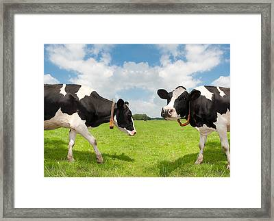 Frisian Cows Framed Print by Hans Engbers