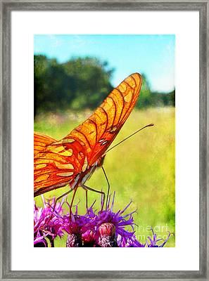 Fritillary On Ironweed Framed Print by Judi Bagwell