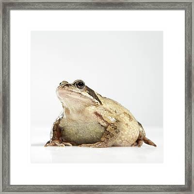 Frog Framed Print by Darren Woolridge Photography - www.DarrenWoolridge.com